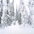 Whiteout, Finland #1